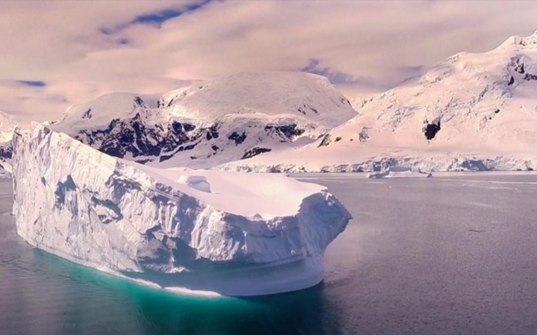 Into the Wild Majesty of Antarctic Wildlife