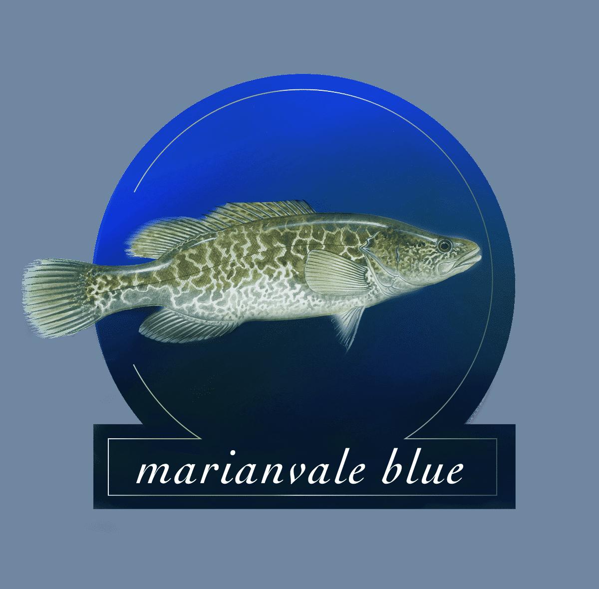 Marianvale Blue Logo